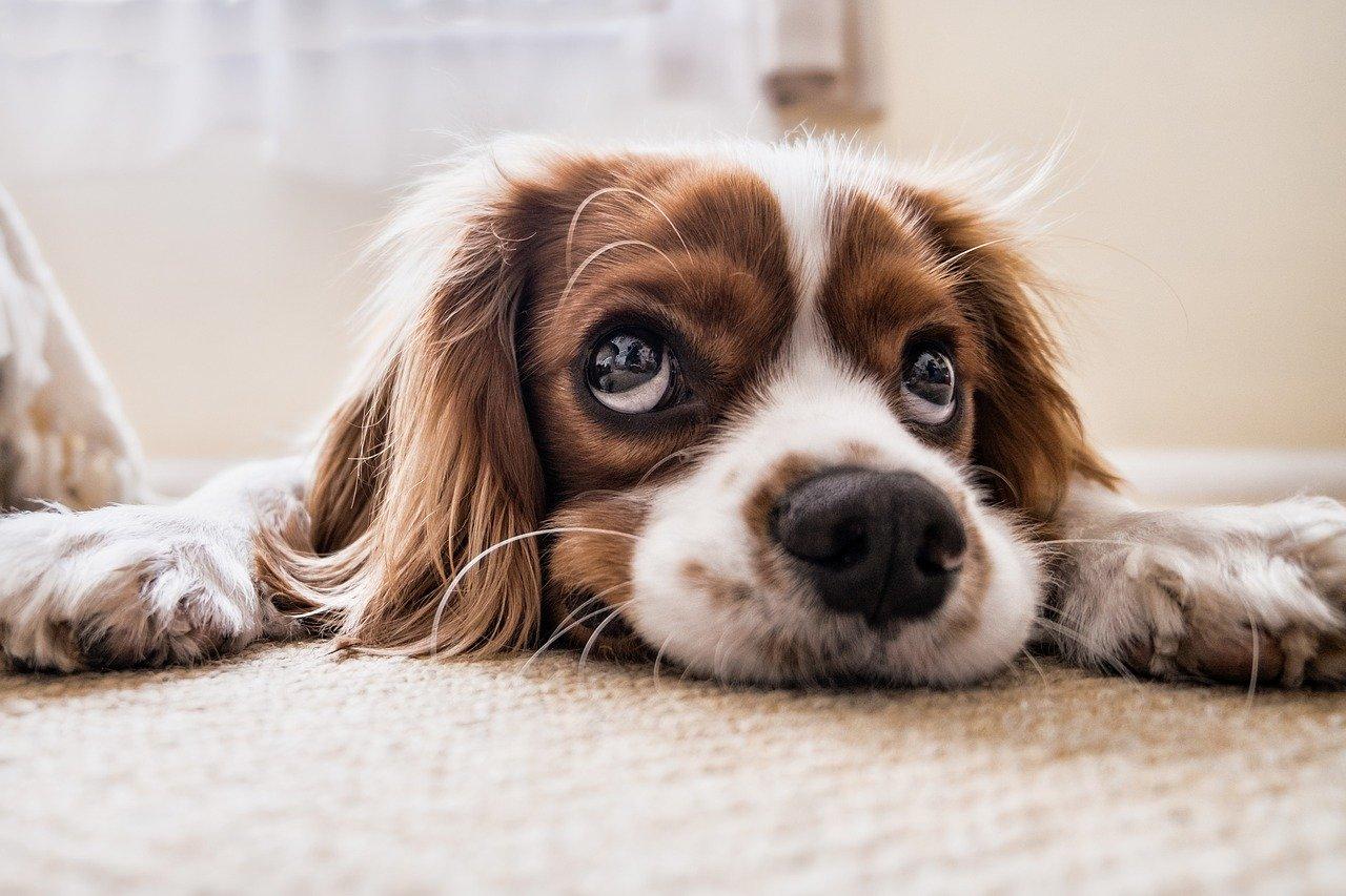 Comment faire si on est allergique aux poils de chien
